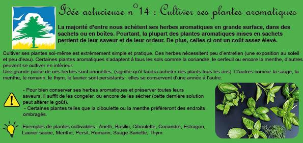idée 14 cultiver ses plantes aromatiques